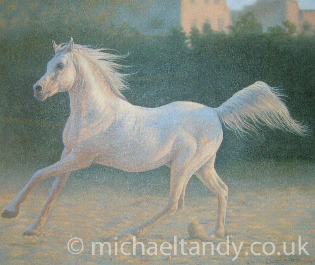Arab Stallion – Oil