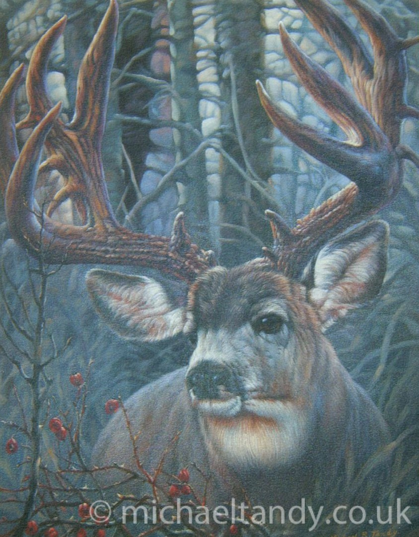 Stag – Oil
